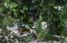 A főtájépítész szerint Budapest fáinak 80 százaléka beteg