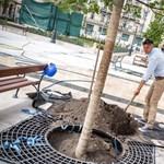 Jön a választás, fákat ültet a József nádor téren az V. kerületi polgármester