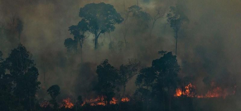 Amazónia kapott némi reményt