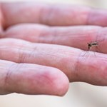 Videó: Feláldoztuk magunkat a szúnyogoknak, hogy önnek már ne kelljen