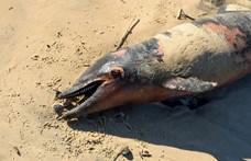 670 delfintetemet mosott partra a víz, a halászokat okolják a történtek miatt
