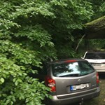 Ez az autó az éjjeli vihar legszerencsésebb túlélője: karnyújtásnyira landolt tőle egy méretes fa - fotók