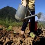 Pofonok is elcsattantak a kínai földvásárlások ellen tiltakozó francia gazdák akciójában
