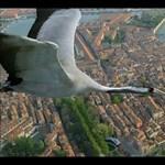Szállj a darvakkal Velence felett! (videó)