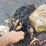 Két strandpapucsot és 115 műanyag poharat találtak egy elpusztult bálna gyomrában