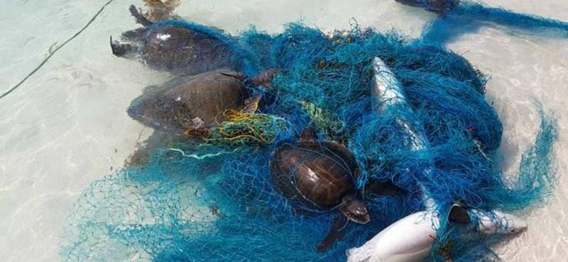 Ezernél is több cápa és rája pusztult már el az óceáni szemét miatt
