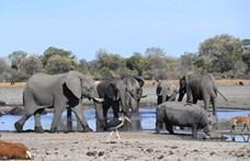 Tömegesen pusztulnak el elefántok Botswanában