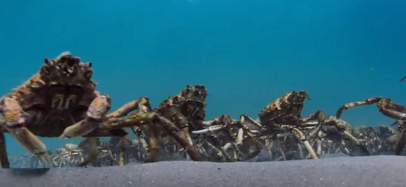 Újabb csodás felvétellel szolgál a brit természetfilm-sorozat, a Blue Planet II – videó
