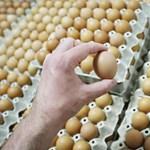 Húsvétkor se mérgezzük meg a családot! – Tippek húsvéti tojásfestéshez