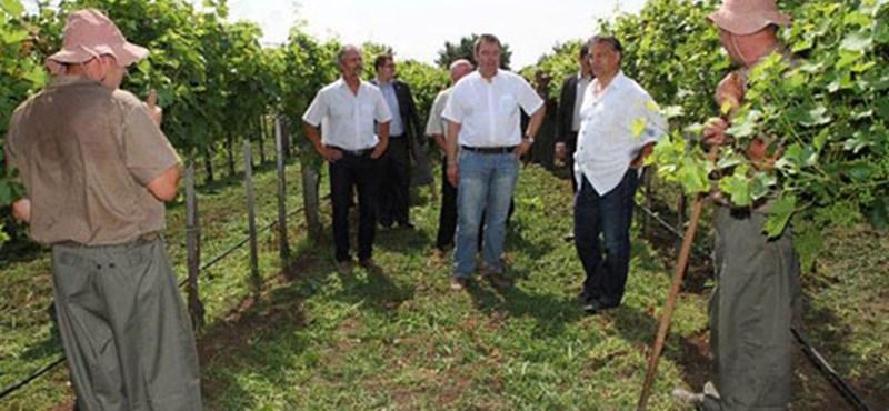 Eltiltaná a rabokat L. Simon szőlőjétől az LMP