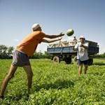 Ezektől a tényezőktől függ Magyarország versenyképessége