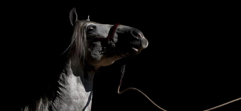 Ló-AIDS: Orrbevarrással kínozták a fertőzött lovat a klinikán