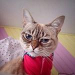 Ismerje meg Grumpy Cat kihívóját, Sauerkrautot