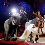 Európai elismerést kapott a Magyar Nemzeti Cirkusz