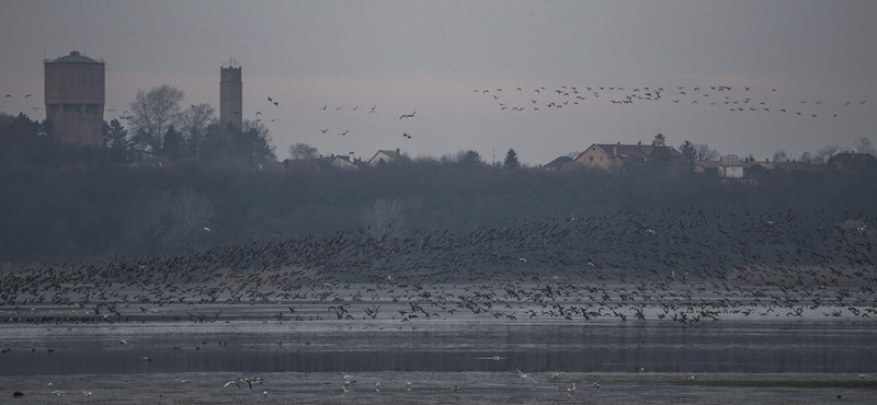 35 ezer madarat várnak a 19. Vadlúd Sokadalomra