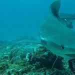 Gyakorlatilag kihaltak a cápák a világ korallzátonyainak ötödén