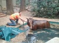 Egy vízzel teli medencében vészelte át a ló a tűzvész pusztítását