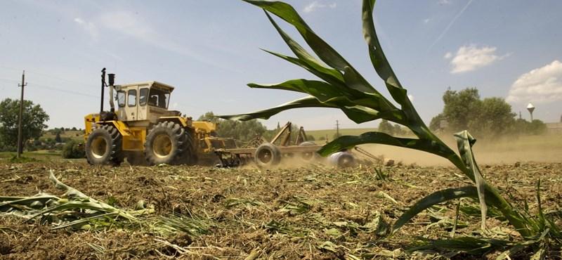 GMO: a kormány ragaszkodik a tilalomhoz, a brazil szóját ez nem izgatja