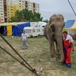 Circo Massimo - Nagyítás-fotógaléria
