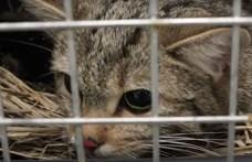 Túl vadnak tűntek a kiscicák: szabadon engedték a tavaly talált vadmacskákat