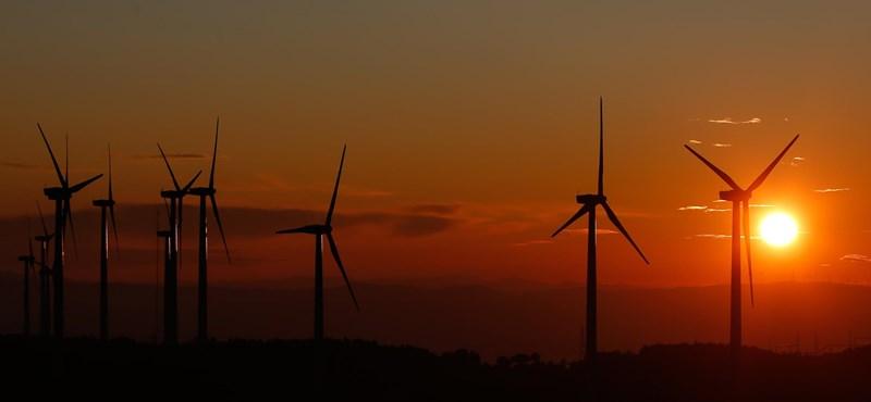 A megújulóenergia-beruházások is veszélyeztethetik a biodiverzitást
