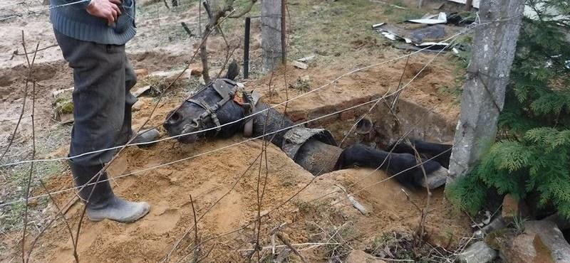 Fotók: Gödörbe zuhant lovat mentettek ki a tűzoltók