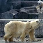 Amit eddig nem tudtunk az Állatkertről