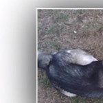 Csavarokkal teleszurkált virsli miatt pusztult el egy kutya Dorogon
