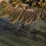 Valaki letarolta a kiemelten védett nádast Balatonakaliban