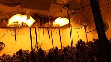 Egy 3 emeleti lakásban találtak marihuána-ültetvényt a rendőrök az Etele úton