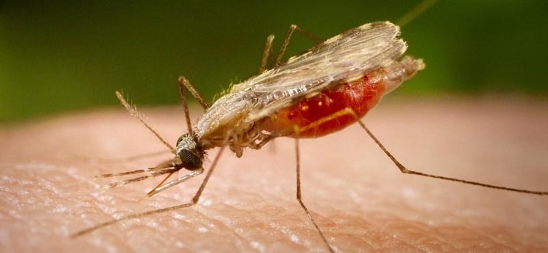 Veszedelmesebbek az egyiptomi csípőszúnyogok a mesterséges fények miatt
