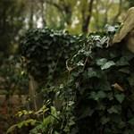 Elhaló emlékeink - Lírai képriport az elhagyott sírokról