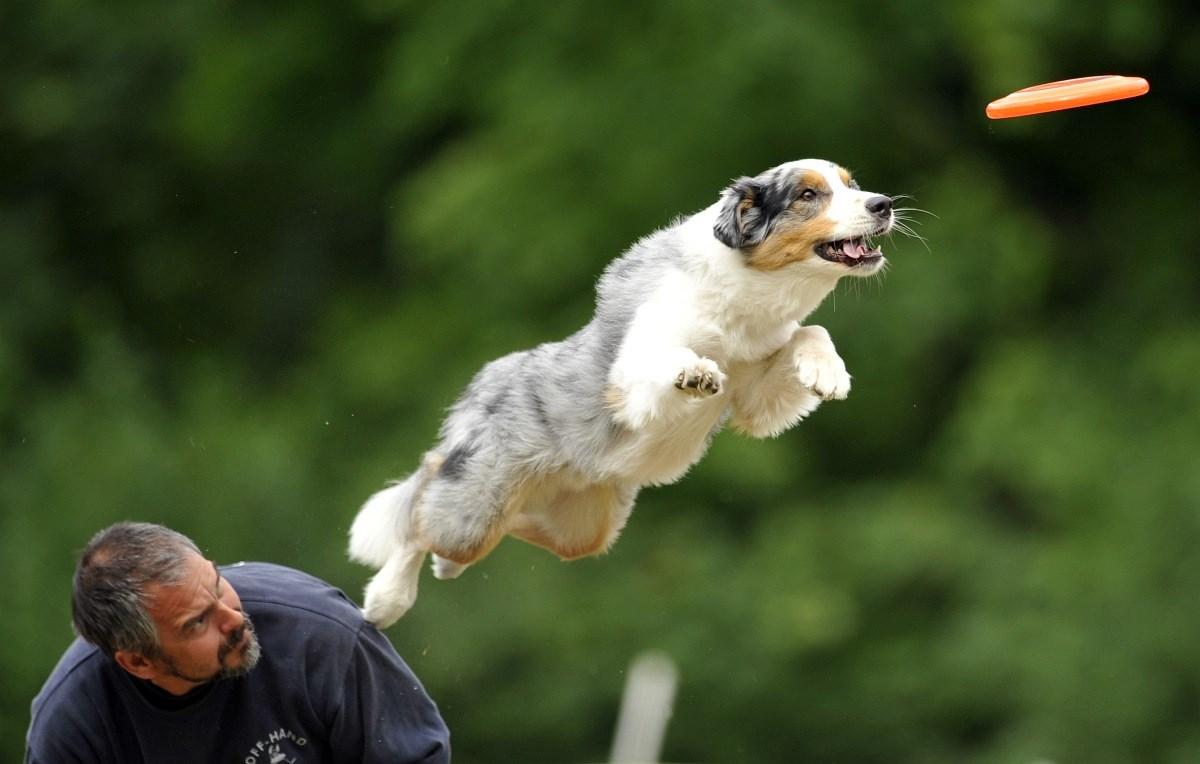 Kutyavilág, kutyaélet - Nagyítás-fotógaléria