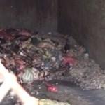 Bűzös folyadék ömlik a Szamosba egy húsüzemből – gyomorforgató videó