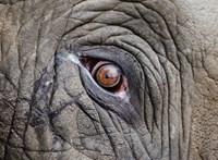 Valami egészen meglepő dolog történik az elefántoknál