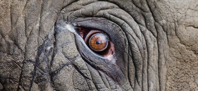 57 orrszarvút és 26 elefántot lőttek ki az orvvadászok tavaly Namíbiában