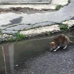 Egymilliárd forintba kerül, hogy eltűnjenek a patkányok a fővárosból