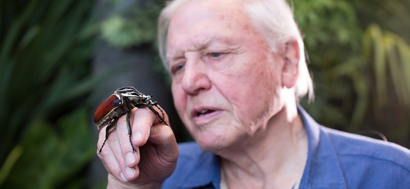 Querrás jugar a Spectrum: 110 horas de increíble película sobre la naturaleza para el 95 cumpleaños de David Attenborough