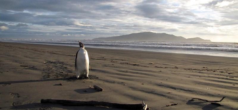 Szelfiző pingvinek