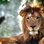 Állatokat csapott agyon egy vezeték egy afrikai nemzeti parkban