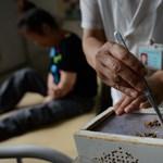 Nagy kínai gyógyászati központot álmodnak Budapestre