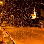 Dunavirágzás: 40 után tértek vissza a kérészek – fotó
