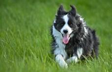 Az Egyesült Királyságban törvénybe foglalják, hogy a gerinces állatoknak érzelmeik vannak