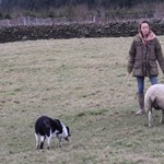 Elképesztő összeget adtak a világ legdrágább pásztorkutyájáért