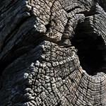 A Stefánia úti fák meggyalázása-e a purhab?