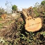 20 hektáron irtják ki az erdőket a Balatonnál az M76-os miatt