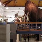 Kiszorítja a Természettudományi Múzeumot a Közszolgálati Egyetem