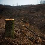Fatolvajok miatt vágják tarra az erdőt Farkaslyukon – Nagyítás-fotógaléria