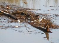 Jeladó palackokkal kutatják a Tiszán hulladék útját