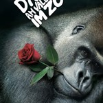 Valentin-napi felnőttprogram a párzó gorillával